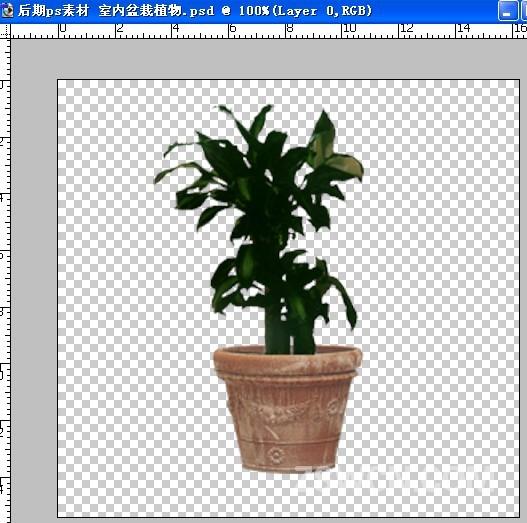 后期ps素材 室内盆栽植物