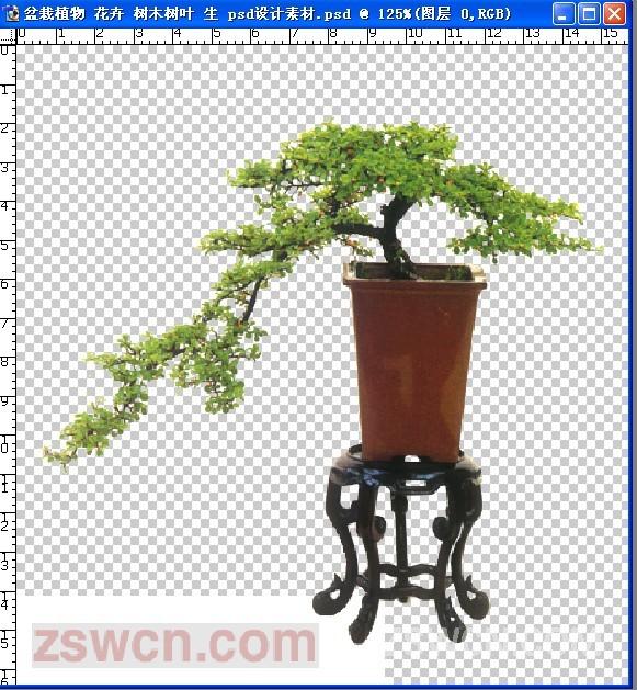 盆栽植物 花卉 树木树叶 生 psd设计素材 - 盆栽 室内