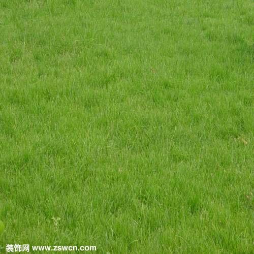 草地贴图 图片3d材质素材下载