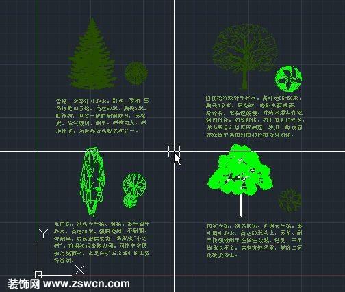 雪松 白皮松常绿针叶乔木 毛白杨 加拿大杨 植物cad平面图 立面图cad